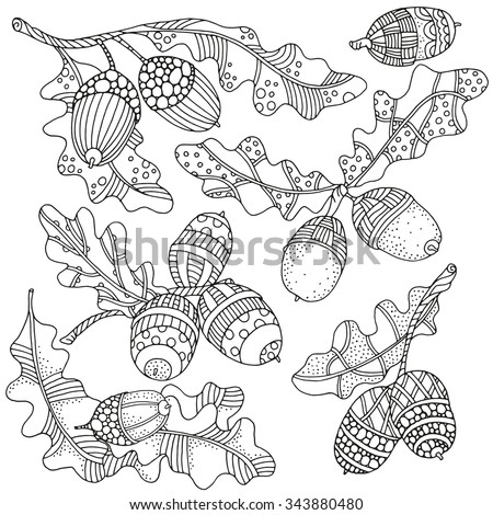 Set of artistically hand drawn acorns and oak leaves  in vector. Ethnic, floral, doodle, zentangle, tribal design elements.  Black and white. Made by trace from sketch.