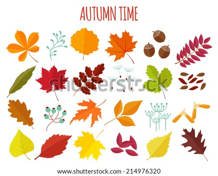 set of autumn leaves and berries in flat style. isolated on  white background - stock vector
