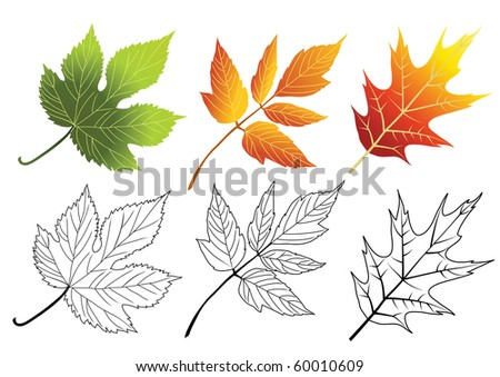 Set of autumn leaves isolated on the white. Vector. - stock vector