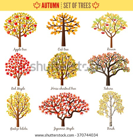 Set of autumn trees on white background. Apple tree, Oak tree, Rowan, Red maple, Horse chestnut tree, Sakura, Ginkgo biloba, Japanese maple, Birch. Vector illustration