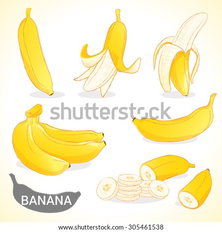 Set of banana fruit in vector and various styles