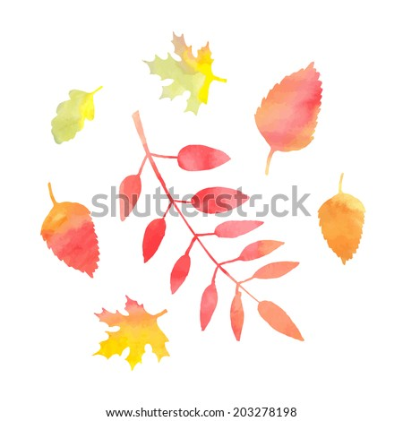 Set of beautiful autumn leaves. Isolated image on white background. - stock vector