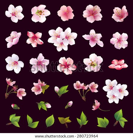 Set of beautiful cherry tree flowers and leaves isolated on black background. Collection of white, pink, purple sakura blossom, japanese cherry tree. Floral spring design elements. Vector illustration - stock vector