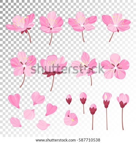 Set of beautiful cherry tree flowers isolated on transparent background. Collection of pink sakura or apple blossom, japanese cherry tree. Floral spring design elements. Vector illustration