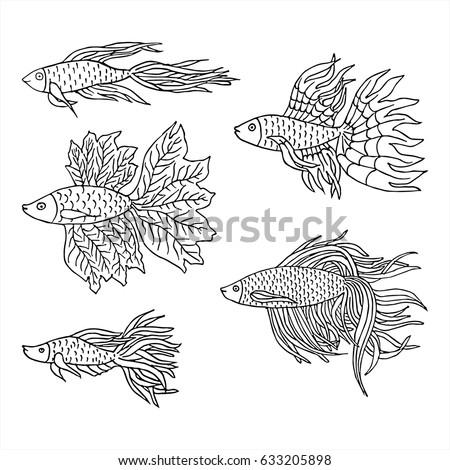 Betta stock vectors images vector art shutterstock for Black and white betta fish