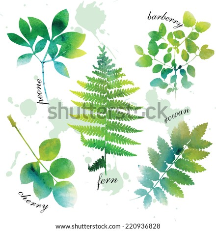 Set of beautiful watercolor green leaves on white background. - stock vector