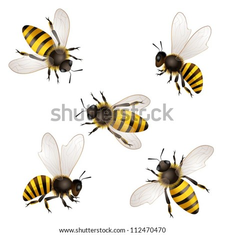 Set of bees  isolated on white - stock vector