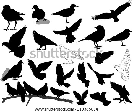 Set of 21 birds and silhouettes of birds - stock vector