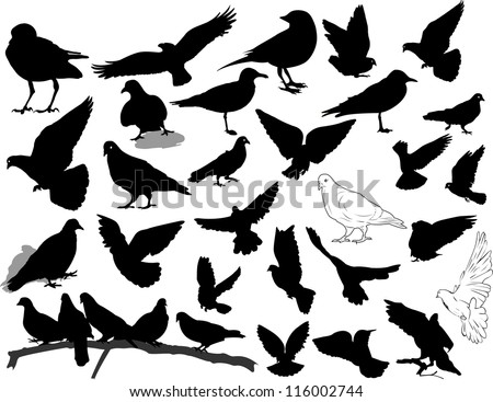 Set of 28 birds and silhouettes of birds