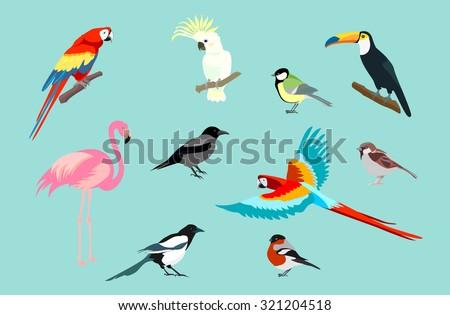 Set of birds. Bright exotic tropical birds. Macaw, Cockatoo, flamingo, toucan, magpie, crow, bullfinch, tit, sparrow. Vector. - stock vector