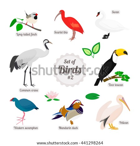 Set of birds. Colorful realistic birds. Long-tailed finch, scarlet ibis, swan, toco toucan, pelican, mandarin duck, western swamphen, common crane. Vector illustration isolated on white background - stock vector