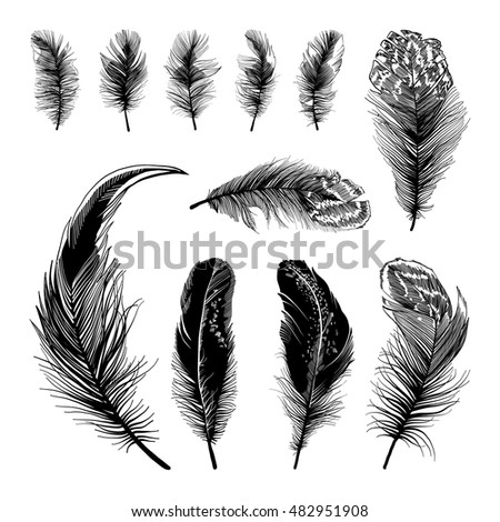 Set of black feathers silhouettes isolated on white background. Vector illustration.