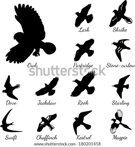 210 Meaningful Bird Tattoos Ultimate Guide September 2018