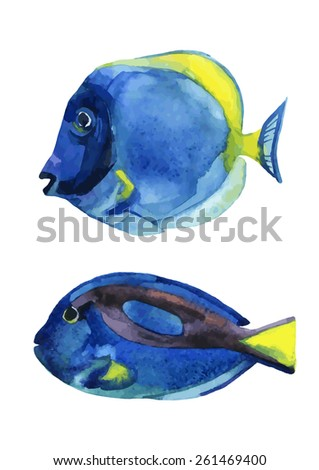 Set of blue tang fishes isolated on white background. Vector illustration - stock vector