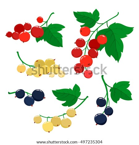 Set of cartoon red, black and white currant berries with green leaves isolated on white background. Bright berries and berries branches.