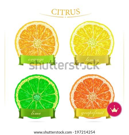 Set of citrus for food design. Fruits. Vitamin C. Orange, grapefruit, lime, lemon.  - stock vector