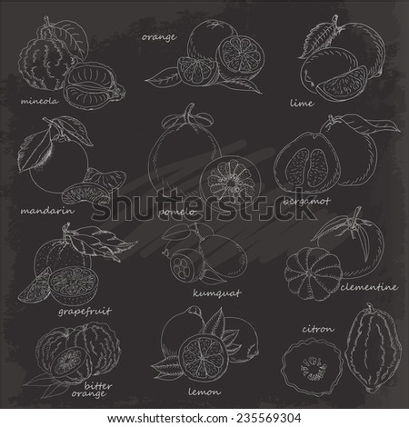 Set of citrus fruits on black background. Vector hand drawing sketch illustration - stock vector