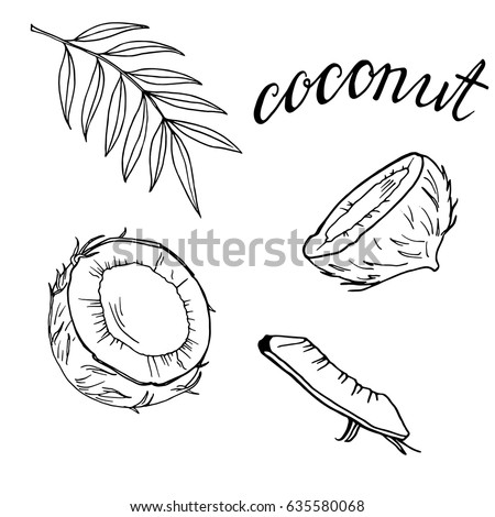 Set of coconut pieces on white background. Hand drawn ink sketch. Hand lettering. Vector illustration.