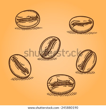 Set of coffee beans. Vintage coffee beans engraving vector illustration