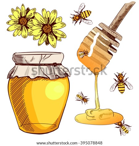 Set of colored sketches. Collection of VECTOR illustrations. HONEY set  - stock vector