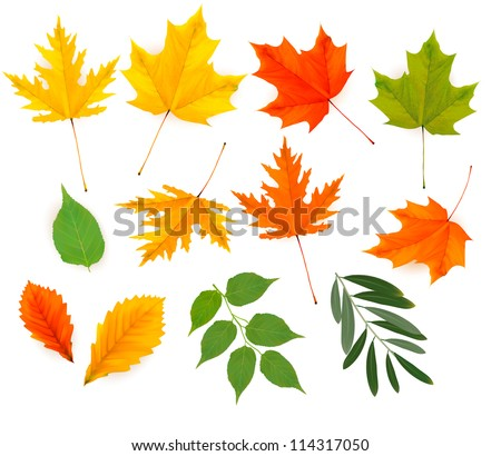 Set of colorful autumn leaves. Vector illustration.