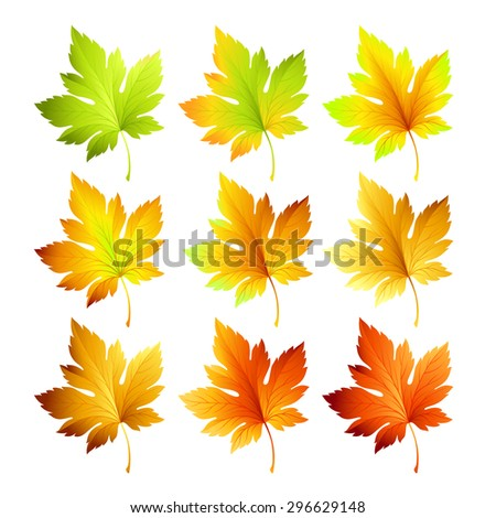 Set of colorful autumn leaves. Vector illustration EPS 10 - stock vector