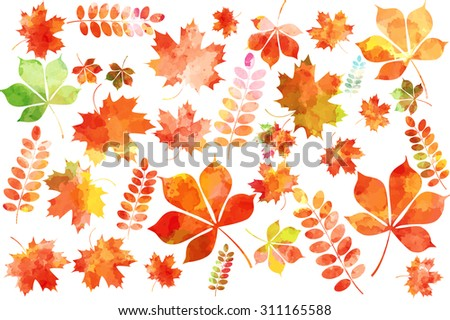 Set of colorful autumn watercolor leaves: maple leaves, mountain ash leaves, chestnut leaves. Vector illustration.  - stock vector
