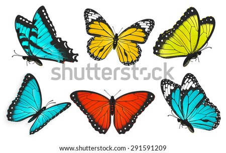 Set Colorful Butterflies Butterfly Vector Illustration Stock Photo ...