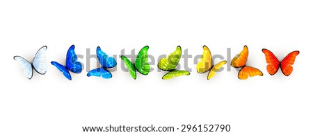 Set of colorful butterflies isolated on white background, illustration. - stock vector