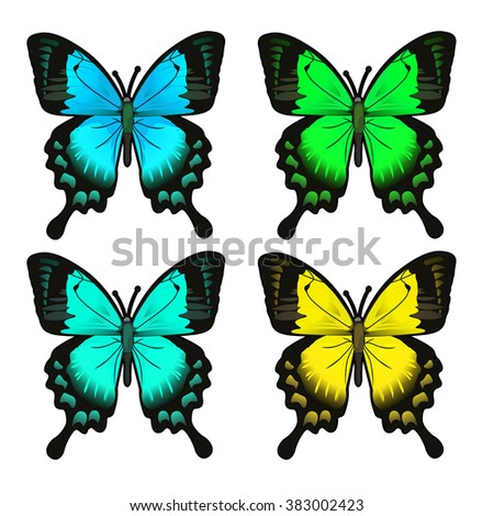 Set Colorful Butterflies Papilio Ulysses Machaon Stock Vector ...