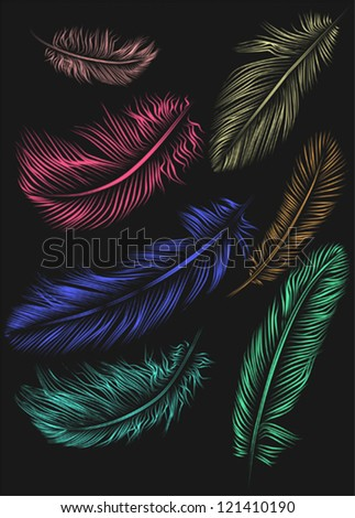 Set of colorful feathers - stock vector