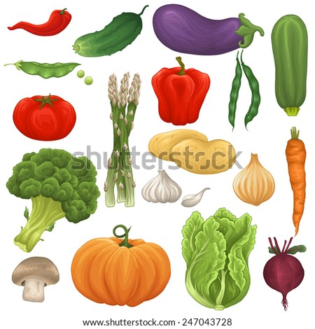 Set of colorful fresh and tasty vegetables - stock vector