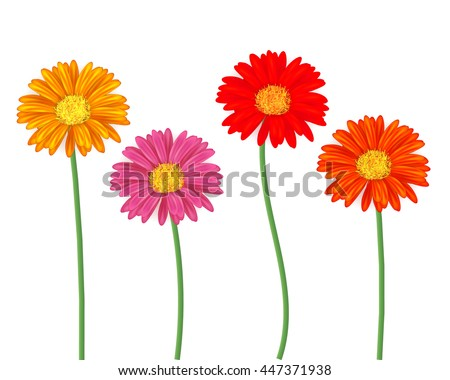 Set of colorfull gerbera flowers isolated on white - stock vector