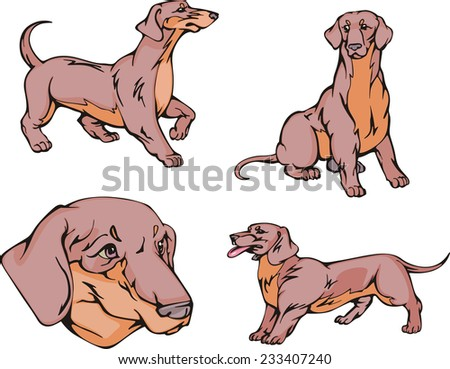 Set of cute dogs - Dachshund breed. Vector illustrations. - stock vector