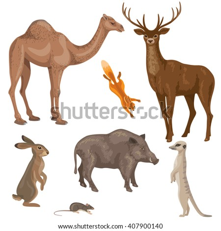 Set of different animals of forest, desert and steppe zones isolated on white.  Simplified images of wild mammals. - stock vector