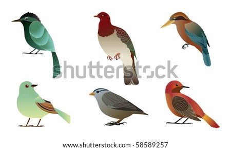 Set of different birds. Details vector illustration.