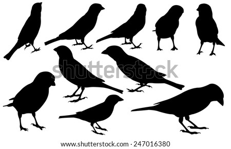 set of different sparrows - stock vector