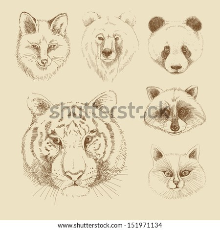 Set of different wild animals: tiger, panda, cat, raccoon, fox, bear - stock vector