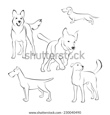 Set of dogs on white background  - stock vector