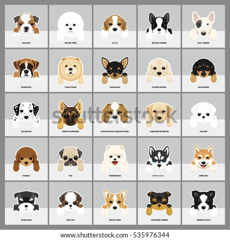 Set of Dogs Vector Illustration. 25 breeds puppy.