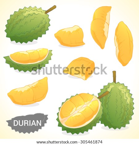 Set of durian in vector and various style