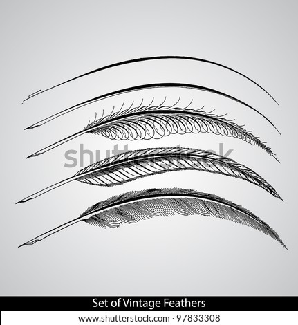 Set of engraved calligraphic vintage feathers. - Gems of Flourishing. - 1888 - stock vector