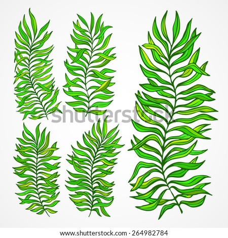 Set of exotic foliage. Vector illustration EPS 10 - stock vector