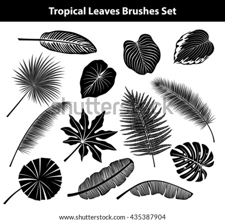 Set of Exotic Tropical Leaves in Black and White. Coconut, Fan, Banana Palm leaves, Aralia, Monstera, Fern, Bird of Paradise Leaves Collection. All Leaves are included as Brushes in Brush Library - stock vector