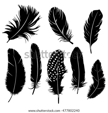 Set of feather vector graphic on white background