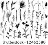 set of field plants and herbs - stock vector