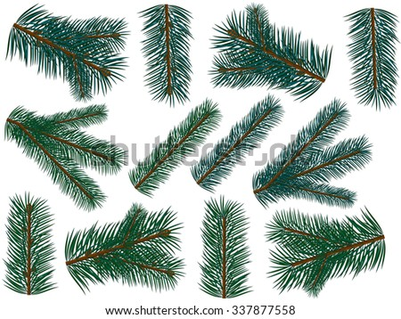 Set of fir branch on white background. Vector illustration