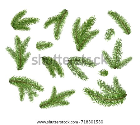 Set of fir branches. Christmas tree, pine, winter.