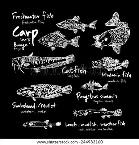 Set of fish / Hand drawn illustrations - vector / black board version - stock vector
