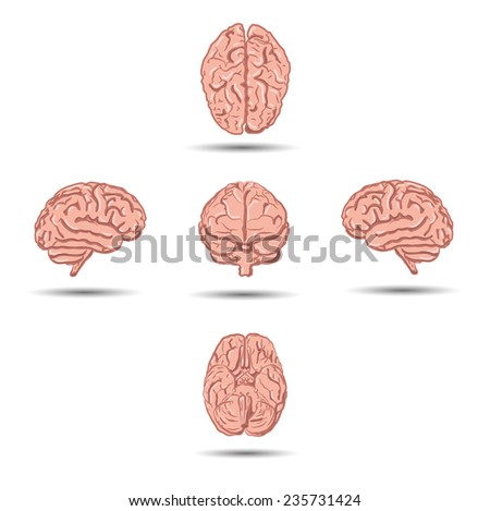 Set of five human brains icons with shadow from different views - stock vector